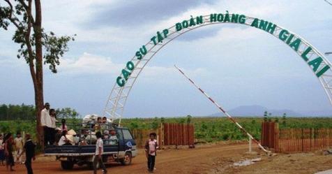 Hoàng Anh Gia Lai khẳng định HAGL Agrico vẫn là công ty con