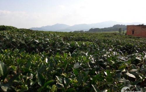 Đất nghỉ dưỡng đồi trà Bảo Lộc