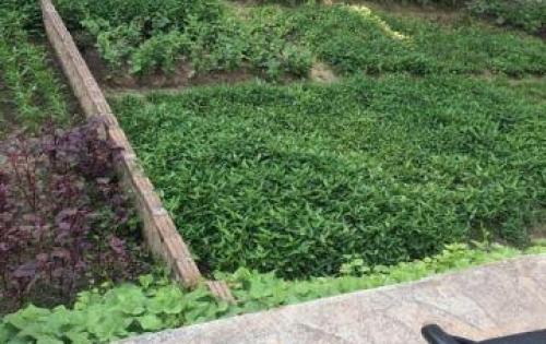 Bán đất Tư Đình-Long Biên.DT 60m2, ô tô vào, giá 40tr/m2.