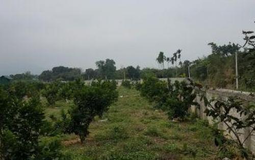 Bán gấp trang trại tại Xã Liên Sơn - Lương Sơn - Hòa Bình