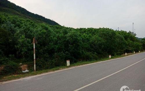 Bán đất rừng xã vạn yên đặc khu kinh tế vân đồn gần casino