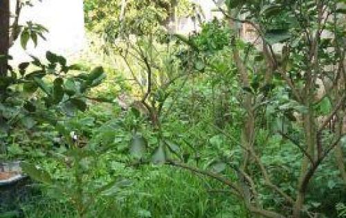 Cần bán rất gấp 122m2 Đất ở Đa Tốn – Gia Lâm, giá 16Tr/m2. Lh:01232507998.