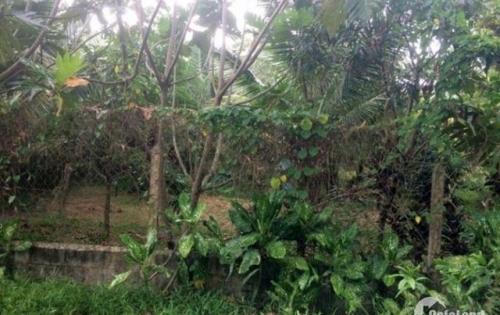 Bán đất trồng cây lâu năm 650m2, đường lớn, dễ dàng lên thổ cư tỷ ( có tl )