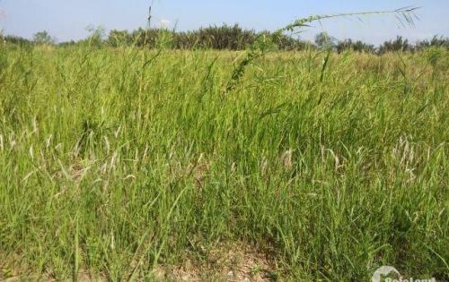 Cần bán 2 lô đất Vị trí đẹp đất ngay đường xương cá 2 long thới đường 12m.kết nối Lê Văn Lương,