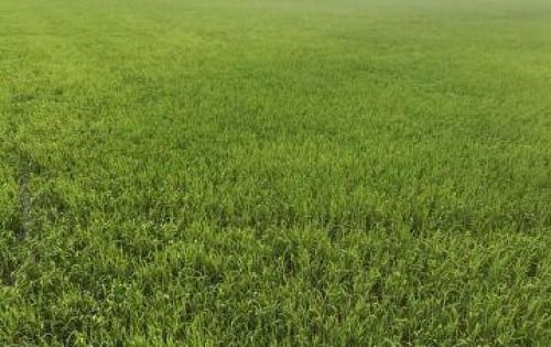 Bán nhanh đất trồng cây ở thôn 1,Phong Phú,Tuy Phong,Bình thuận Diện tích : 14000m2 Giấy tờ pháp lý đầy đủ và hợp lệ Liên hệ : 0166.866.3530 hoặc 0901.575.656