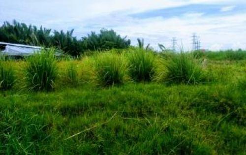 Nhà tôi cần bán 1000m2 đất vườn ở đường Phạm Hữu Lầu giá 5.7tr/m2.
