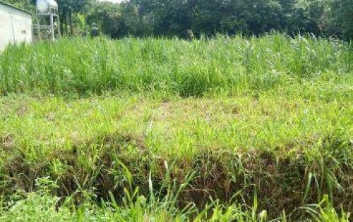chính chủ bán gấp lô đất giá rẻ thổ cư mặt tiền gần khu công nghiệp Trảng Bàng Tây Ninh