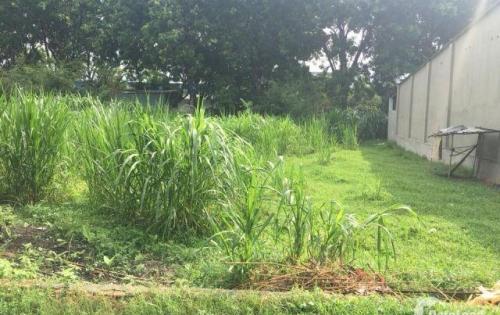 chính chủ bán đất thổ cư giá rẻ gần khu công nghiệp Trảng Bàng Tây Ninh