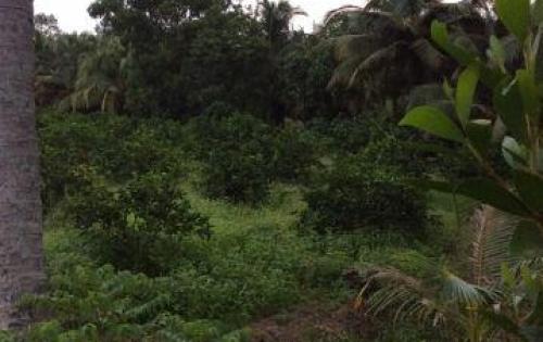 Bán 11500m2 đất vườn Xã Thạnh Lợi Huyện Bến Lức giá 1,45 tỷ (130.000 đồng/m2)