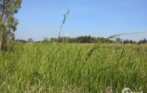 bán gấp lô đất thổ vườn 600mchỉ 2 tỷ 6 tặng 50m sổ hồng riêng hẻm 6m lh chính chủ 0938847327