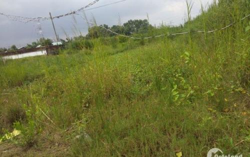Cần bán gấp lô đất trồng cây lâu năm 656m 4tr5/m đường 6m Đường Phạm Hữu Lầu giáp Phú Mỹ Hưng 2.