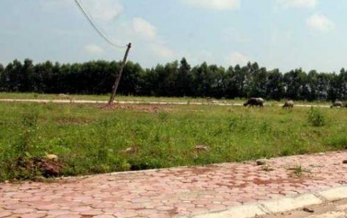 bán 100m2 đất thổ mặt tiền 835, shr, có NH hỗ trợ