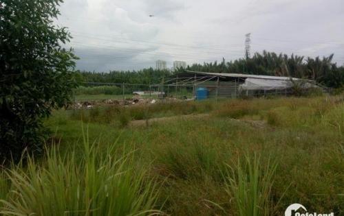 Nóng.! bán đất thổ vườn dt đẹp 1000m2 đường Phạm Hữu Lầu, hẻm 12m giá 5,5 triệu/m2,P H Lầu