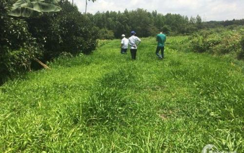 Cần bán 1 mẫu đất mặt tiền đường, 750tr/sào Tam Phước, Biên Hòa.