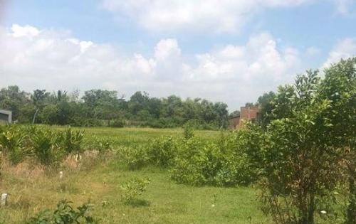 Đất vườn Bình Chánh, có sổ hồng, sang tên nhanh gọn
