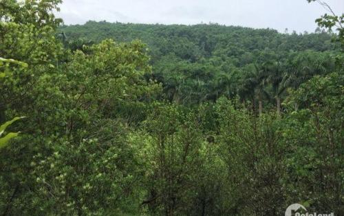 Bán trang trại dọc quốc lộ 446 xã Tiến Xuân view Hồ tuyệt đẹp