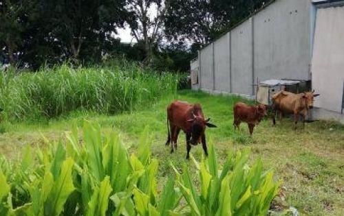 Gia  đình  đang  cần tiền nên cần bán gấp lô đất thổ cư giá rẻ gần KCN Trảng Bàng