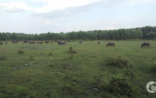 Đất Phước Tân 800m2, sổ hồng riêng, giá tốt, lh: 0901315960