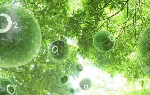 Thống nhất Complex mang đến cuộc sống xanh giữa lòng Hà Nội