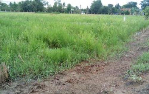 Bán gấp mảnh đất nông nghiệp cạnh quốc lộ 1A Bến Lức, Long An