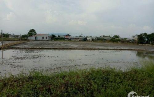 Không người trông coi nên cần bán gấp 2000m2 đất ruộng.