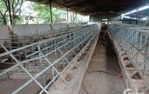 Bán Nhà và trại heo rộng 3 xào tại Hẻm Võ Văn Kiệt, Khánh Xuân BMT, 3000m2 chỉ 1,05 tỷ