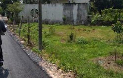 Bán đất Tân An Hội, khu vực Bàu Tre