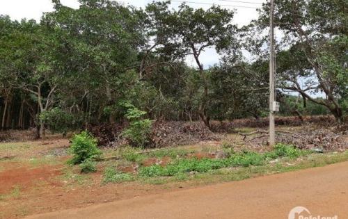 Bán đất đẹp mặt tiền đường Phước Bình, Long Thành, Đồng Nai, 3665m2
