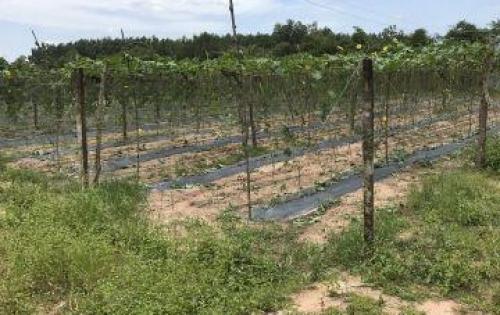 Cần bán lô đất đầu tư mặt tiền đường vành đai 3
