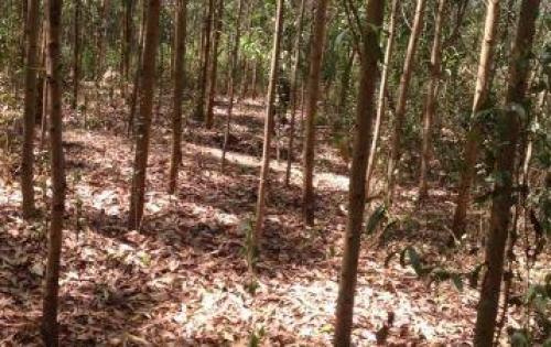 Cần bán đất trồng Chàm LH anh Bình 0907886550