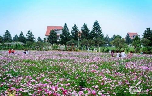 Bán biệt thự The Phoneix Garden, biệt thự sinh thái Đan Phượng