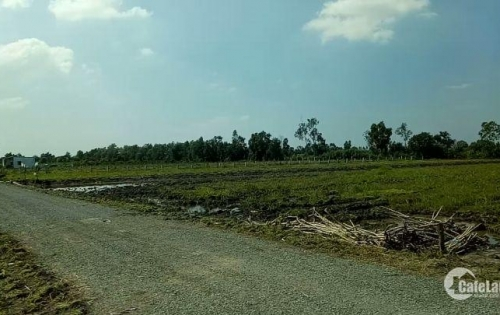 Cần tiền bán gấp lô đất mặt tiền đường tại xã Bình Đức-Long An