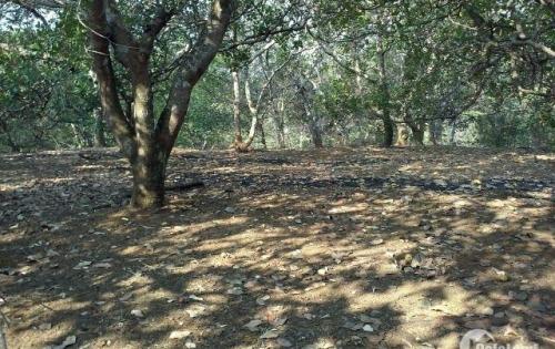 Bán 10ha đất nông nghiệp ̣(ưu tiên làm trang trại )