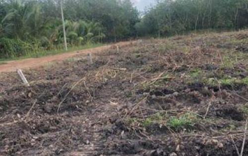 Đất nuôi Yến Minh Tân Dầu Tiếng Bình DƯơng giá rẻ 450k/m đầu tư siêu lợi nhuận