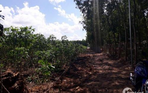 Chính chủ bán lô đất sau ủy ban Tân Hiệp, Long Thành, đất đẹp, cao ráo đối diện khu vui chơi, 9500m2 có 200m2 thổ cư.