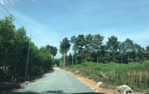 Chính chủ bán lô đất 9500m2 sau ủy ban Tân Hiệp, Long Thành, 200m2 thổ cư, giá 13.2 tỷ