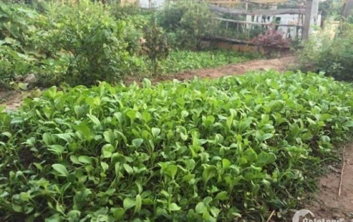 Bán căn Góc tại HH2A Linh Đàm, 3 phòng ngủ 82m2. Tặng mảnh đất ven hồ trồng rau 55 triệu