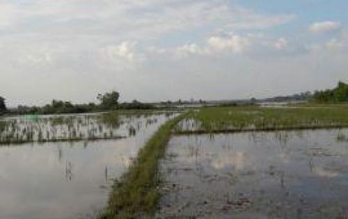Cần nhượng lại khu đất 10.620m2 đất trồng lúa Tỉnh Lộ 7, xã Thái Mỹ, Củ Chi.