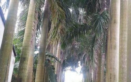 Bán đất tại ngõ 238 Đường Âu Cơ, Phường Quảng An, Quận Tây Hồ, Hà Nội, giá bán 13 tỷ