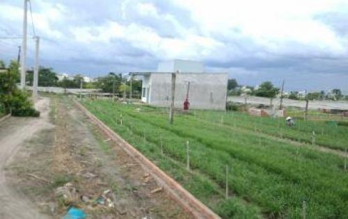 Bán đất Tân Phong giá rẻ bèo nhèo