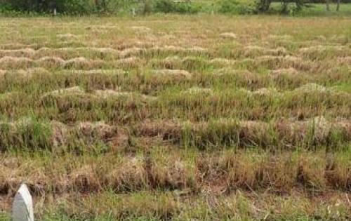 Gia đình kẹt tiền và cần bán gấp đất 8900m2 ( 322m thổ, 3966 m vườn, 4585 lúa)