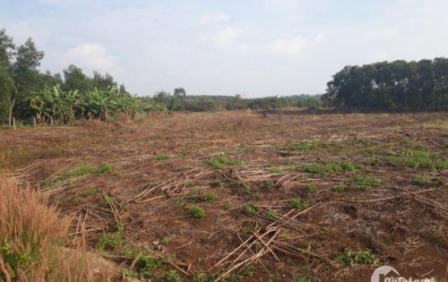 Bán đất Bàu Cạn giá rẻ 500 ngàn/m2 sổ đỏ, công chứng ngay.