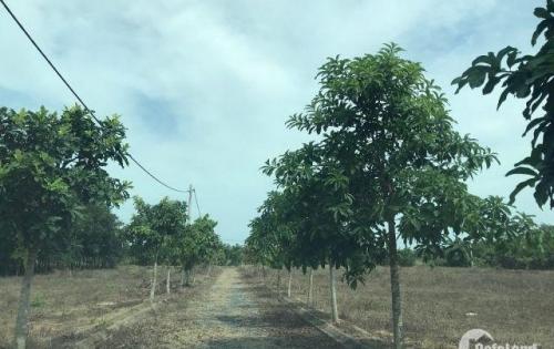 Bán 1 mẫu đất Bàu Cạn đã có hạ tầng, điện 3 pha chỉ 2.2 triệu/m2.