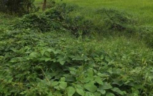 Cần bán nhanh đất 2 mặt tiền đường 12m Nhà Dài, huyện Thủ Thừa, Long An