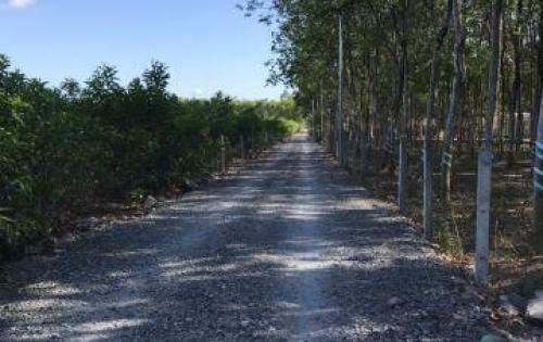 Cần tiền thu hồi vốn bán gấp 1 mẫu đất đẹp sau UBND Tân Hiệp.