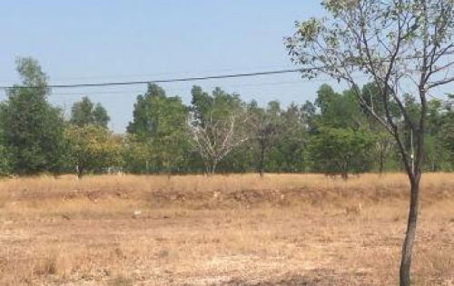 Cần tiền giải quyết việc riêng nên muốn bán 300m2 đất và 2 dãy trọ đang cho thuê