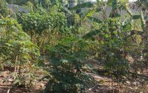Bán gấp lô góc 110m2 khu Dân Cư Tân Định,Thị Xã Bến Cát