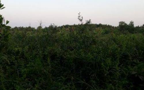 BÁN BÁN Bán! 1 lô đất nông nghiệp  Mặt tiền đường kênh  liên vùng Bình Lợi, Bình chánh, HCM