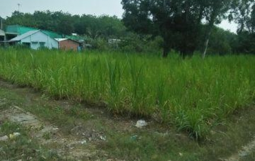 Đất thổ vườn Củ Chi 780m2 Giá 1,3 tỷ