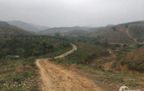 chuyển nhượng 40 ah làm dự án sinh thái nghxi dưỡng tại huyện kỳ sơn tỉnh hòa bình